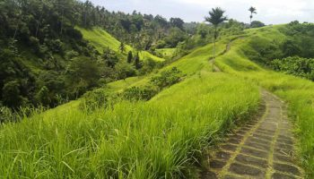 Campuhan Ubud Ridge Walk